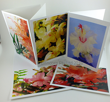 Zygocactus greeting cards